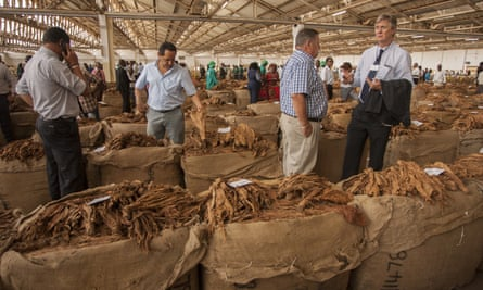 Buyers at a Malawi auction house inspect tobacco, a cornerstone of the economy and its second largest employer.