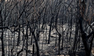 Dead trees mark the scorched landscape after a wildfire in Kangaroo Valley, New South Wales, Australia.