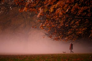 A misty morning dog walk in Greenwich Park