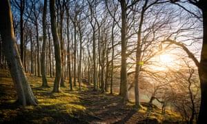 Sharpenhoe Clappers beech wood, Bedfordshire