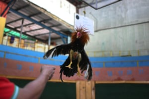 Caracas, Venezuela. Angel Salamanca trains a cockerel at the Club Gallistico Caracas cockfighting club. The country's arenas and clubs remain shut during the coronavirus pandemic but many owners have continued to train their birds