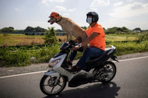 Cavite, Philippines Motorcycle enthusiast Gilbert Delos Reyes takes his pet dog Bogie for ride in Kawit