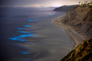 Blue waves, illuminated by the light of bioluminescent organisms, crash along the coast of Blacks Beach in the community of La Jolla.