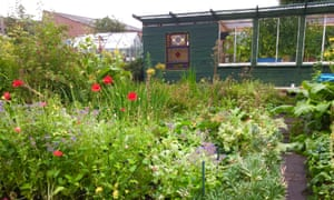 Shed and poppies, New Victoria Gardens, Pollokshields, Glasgow. 'It's a quiet sanctuary in the city. Enter through the magic green door and leave all the stress behind.'