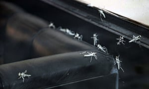 Insects on seating