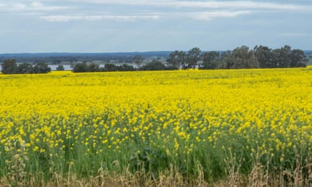 Canola crops blooming near Corop, Victoria.