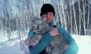 paul nicklen holding a wild canadian lynx in sunny snowy birch woodland