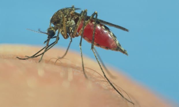 Scientists divided over new research method to combat malaria