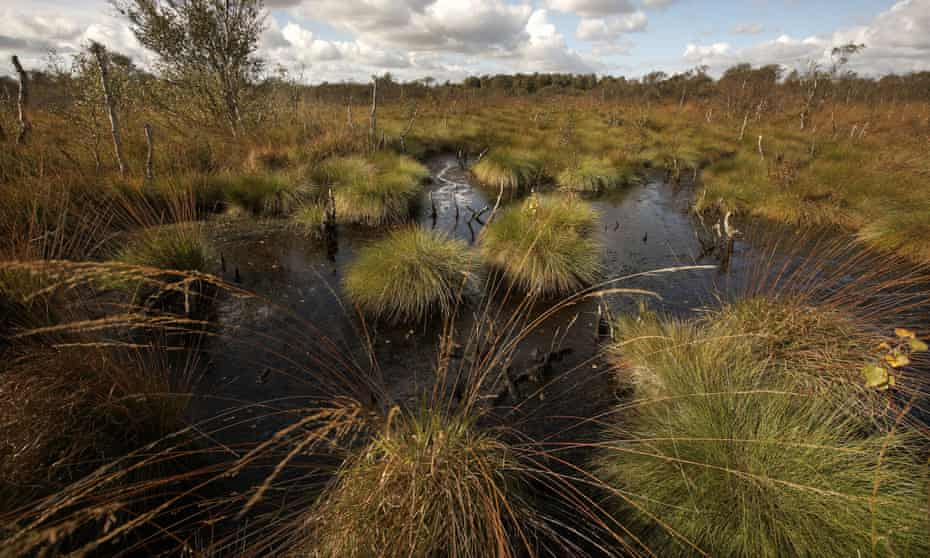 Crowle Moor and Thorne Moor national nature reserve in Yorkshire. The UK's peatlands store three times as much carbon as the nation's forests.