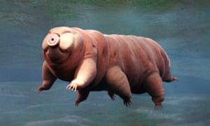 tardigrade swimming in water