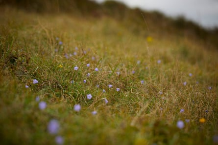 Wildflowers on Waterhall golf course include harebells (pictured), lady's bedstraw and betony