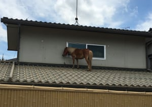 A miniature horse stranded on a rooftop in the Mabicho area