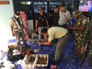 Two baby orangutans found inside a vehicle driven by a wildlife smuggler attempting to cross into Thailand from Malaysia at Padang Besar. Also in the car were 51 tortoises and six racoons.