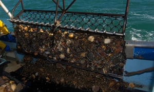 A fisherman is opening a scallop dredge on the fishing boat deck