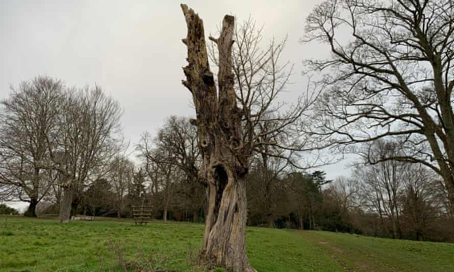 The sycamore tree would have been here in the time of Benjamin Disraeli, who lived at what is now the National Trust's Hughenden estate.