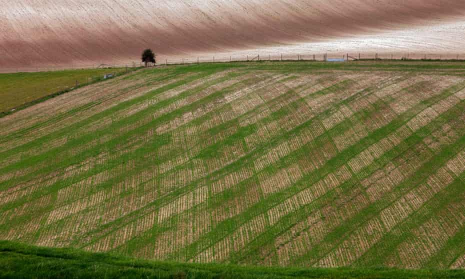 'The agriculture industry is characterised by economies of scale' ... farmland owned by the Duchy of Cornwall, Dorset.
