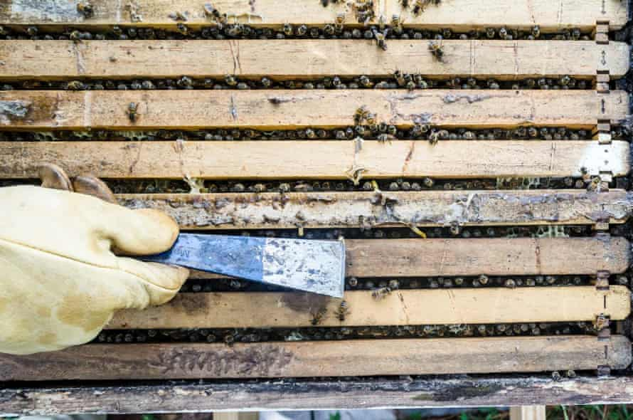 Rob Greenfield took up beekeeping as part of his project to forgo buying food.