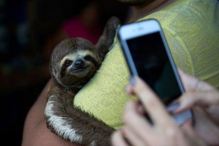 Sloth selfie Brazil