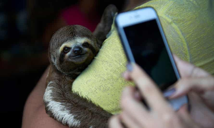 A tourist prepares to take a photo of a sloth being held up for the image. Brazil