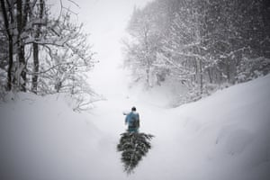 A woman drags a tree up a snow-covered hill