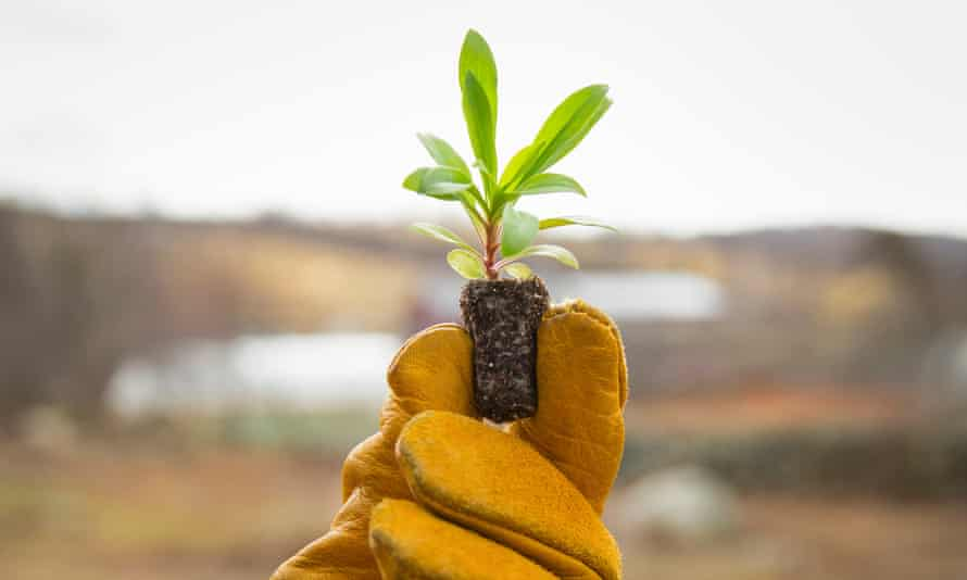 In a time of increasing population growth, climate change and environmental degradation, organic farming could hold the answer.