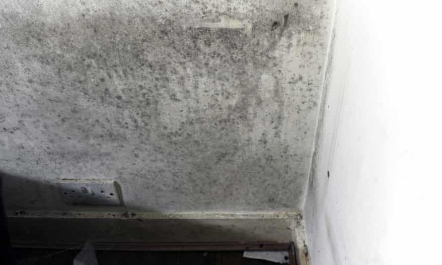 Mould on the walls of a property in Newham