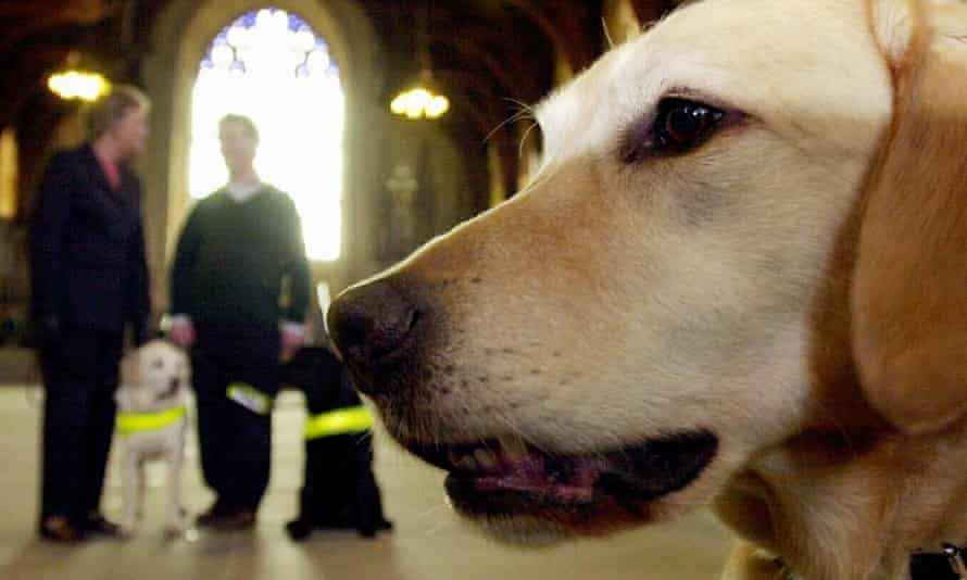 Guide dog owners inside Westminster Hall