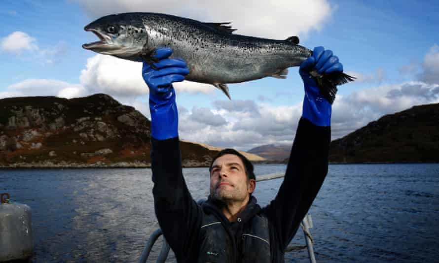 Salmon farm worker Gary Trotter with a farmed salmon at Loch Duart in Scotland.