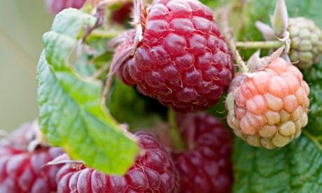 How to grow berries | Alys Fowler