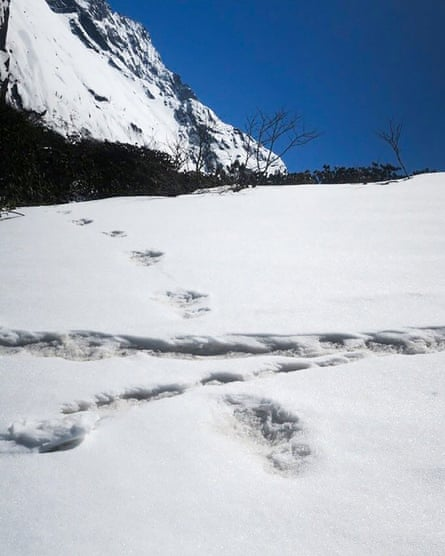 Pictures of a 'yeti footprints'