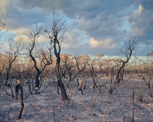 Within days this fire had stripped the Australian bush, full of native trees and animals