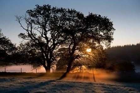 Sunrise in Savernake Forest, Wiltshire