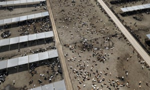 Cattle ranch in drought-hit California, US. Intensive farming is a heavy user of water and big cause of greenhouse gas emissions.