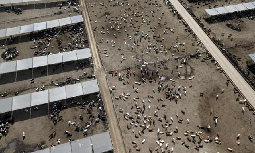 A cattle ranch in California.
