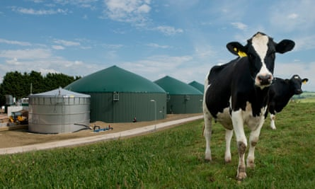 From cow pat to biogas at the anaerobic digestion plant at Wyke Farms in Somerset.