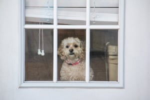 A dog looks out the window, waiting for its owners to return