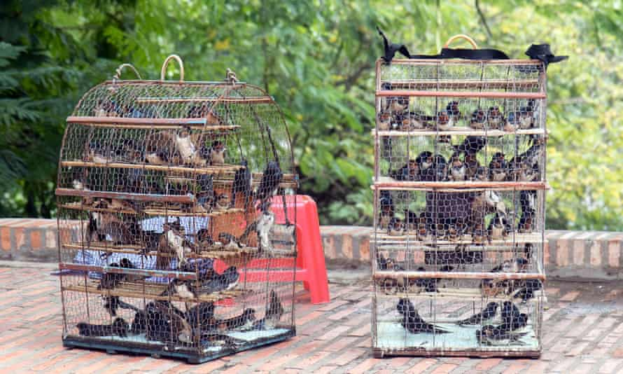 Birds in a cages at Buddhist monastery Wat Phnom