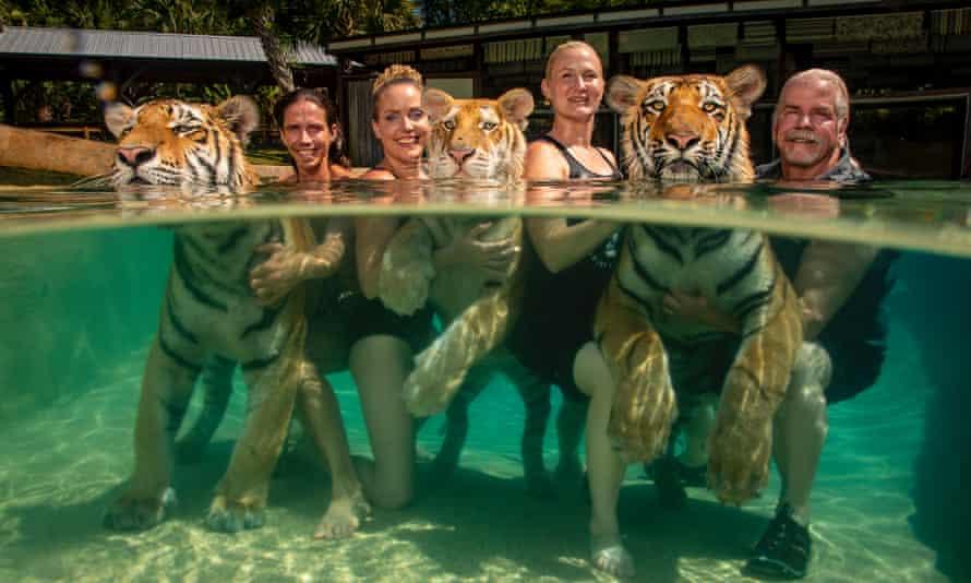 Wild swimming in Tiger Safari in Myrtle Beach South Carolina.