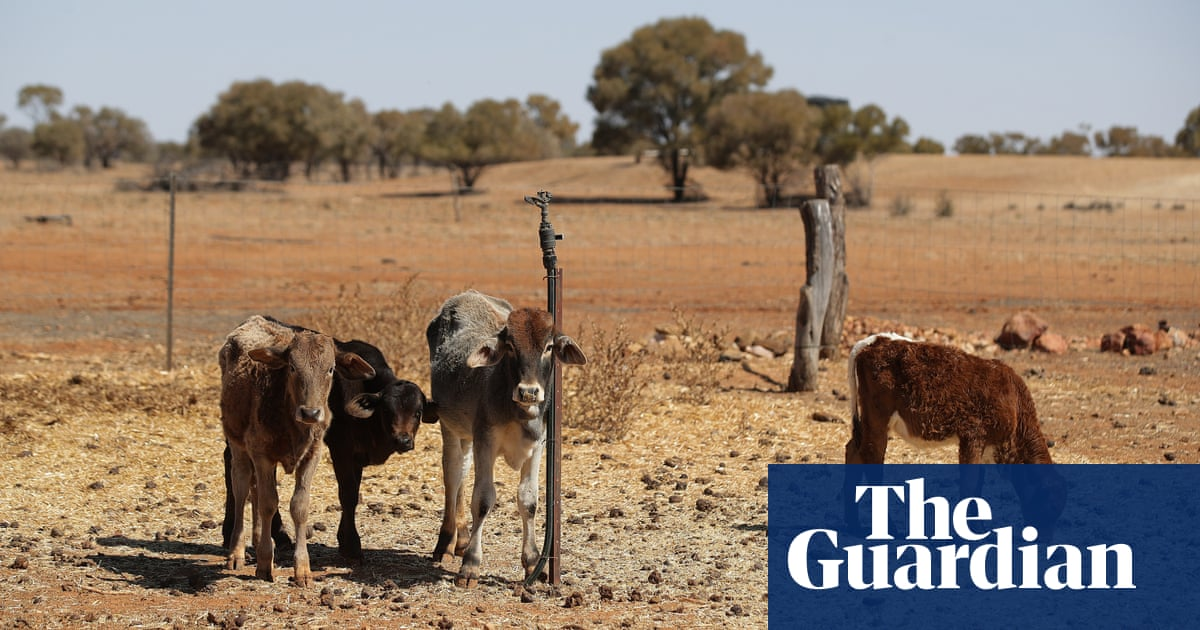 Climate change making drought worse, farmers' federation chief says