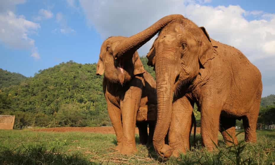The Elephant Nature Park serves as a sanctuary