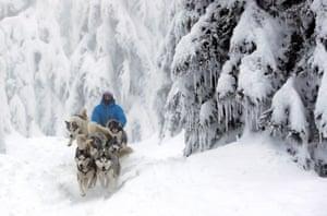 A musher rides his dog sled