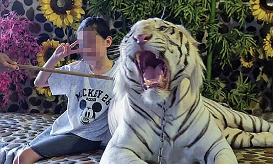 A woman sits next to a tiger to get a selfie