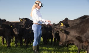 A young farmer wears a VR headset beside a herd of Angus beef cattle.