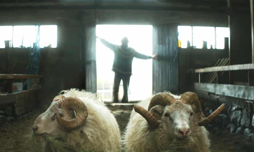 'Ancestral stock': a way of life is under threat in Rams.