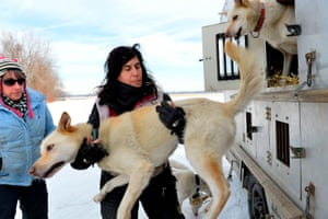 Marla Brodsky helps her dogs out of a transport truck