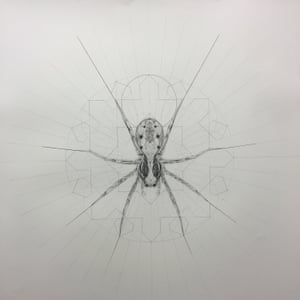 Spider, a drawing on paper.