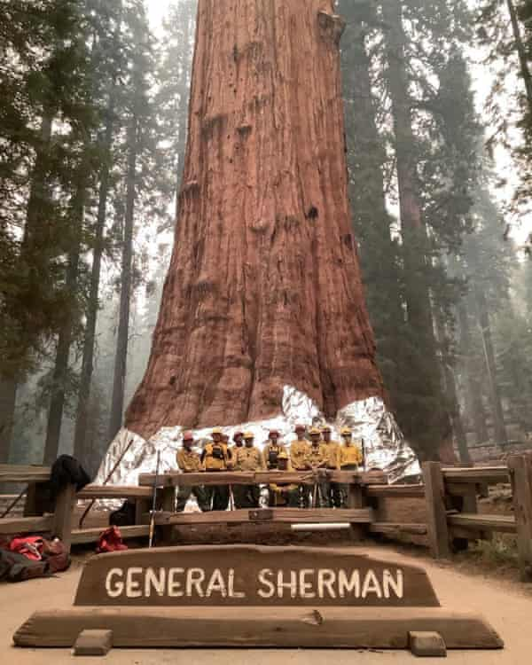 Firefighters pose next to the General Sherman Tree after wrapping it in fire-resistant blanket on 17 September.