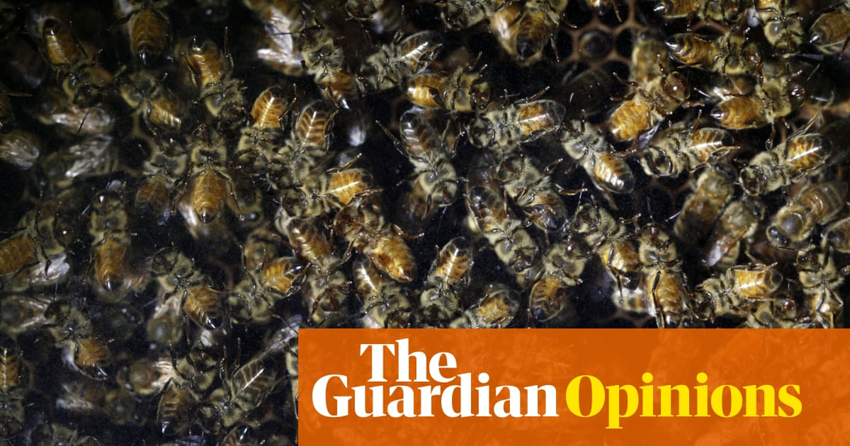 The Guardian view on the mass death of insects: this threatens us all | Editorial