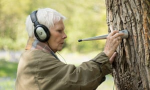 Judi Dench: My Passion For Trees. 'Ah, it's riveting.'
