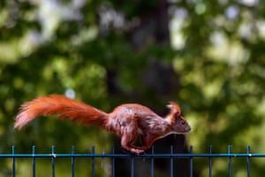 A squirrel runs across a fence as the sun shines in Berlin's Kreuzberg district